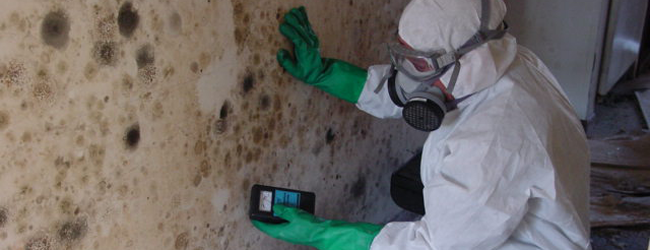 Mold inspections are the most important procedures in the process of mold removal. Because most of the time, the human eye cannot detect the mold, which is often invisible