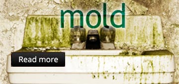 mold removal & remedition